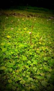 Tennessee Grass