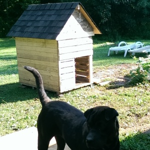 Here you can see the mostly completed pallet dog house - including dog.