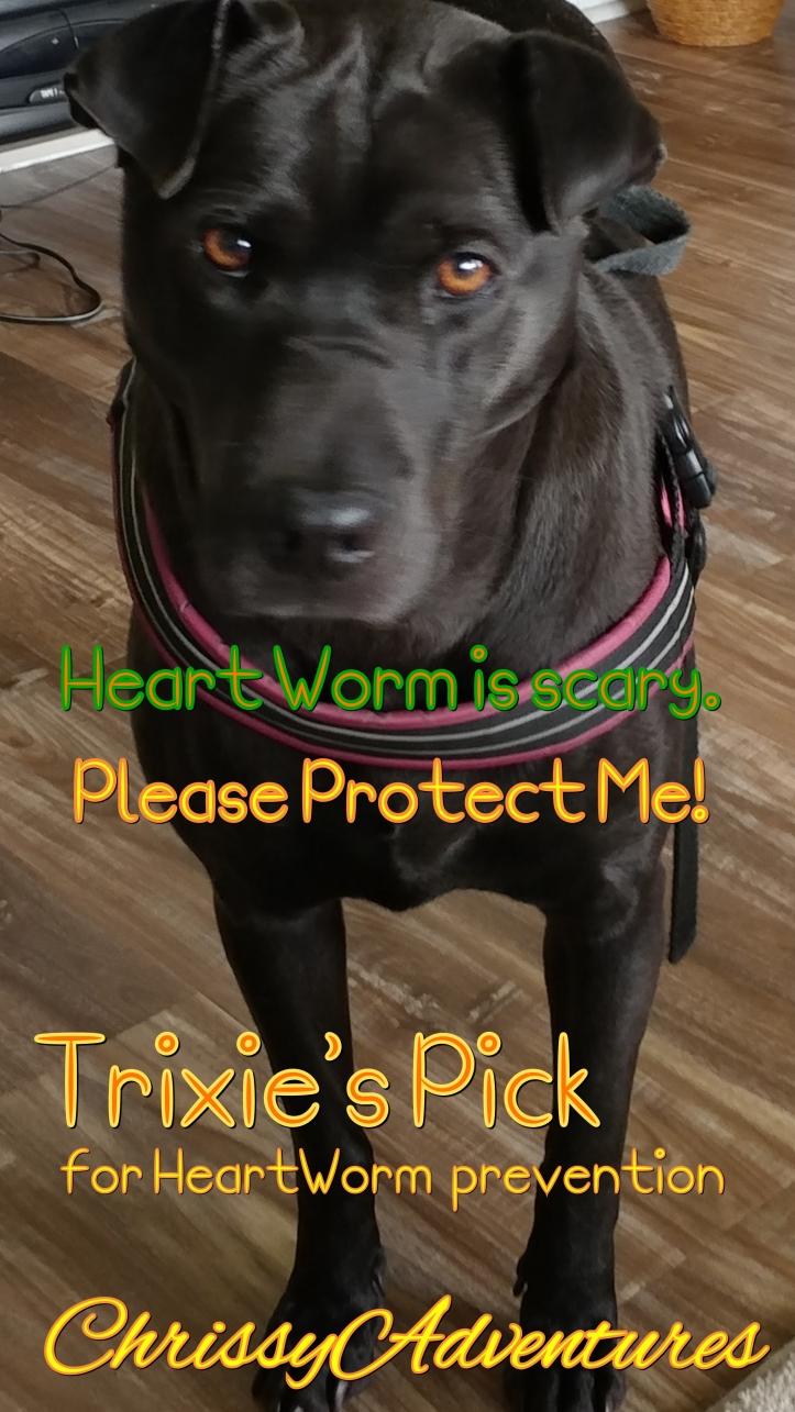 Trixie's Corner Best Heartworm